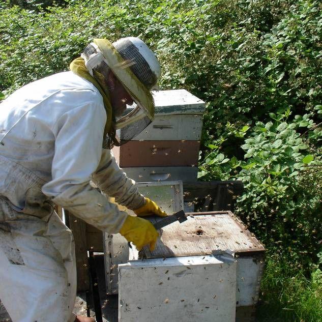 Bienenhaus selber bauen Bienen Pinterest Bee keeping, Bees - küchenmöbel selber bauen