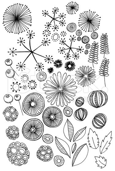 Hand drawn doodles of natural objects - seeds, leaves, pods