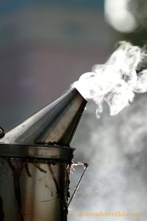 A bee smoker - used to calm the honey bees when the