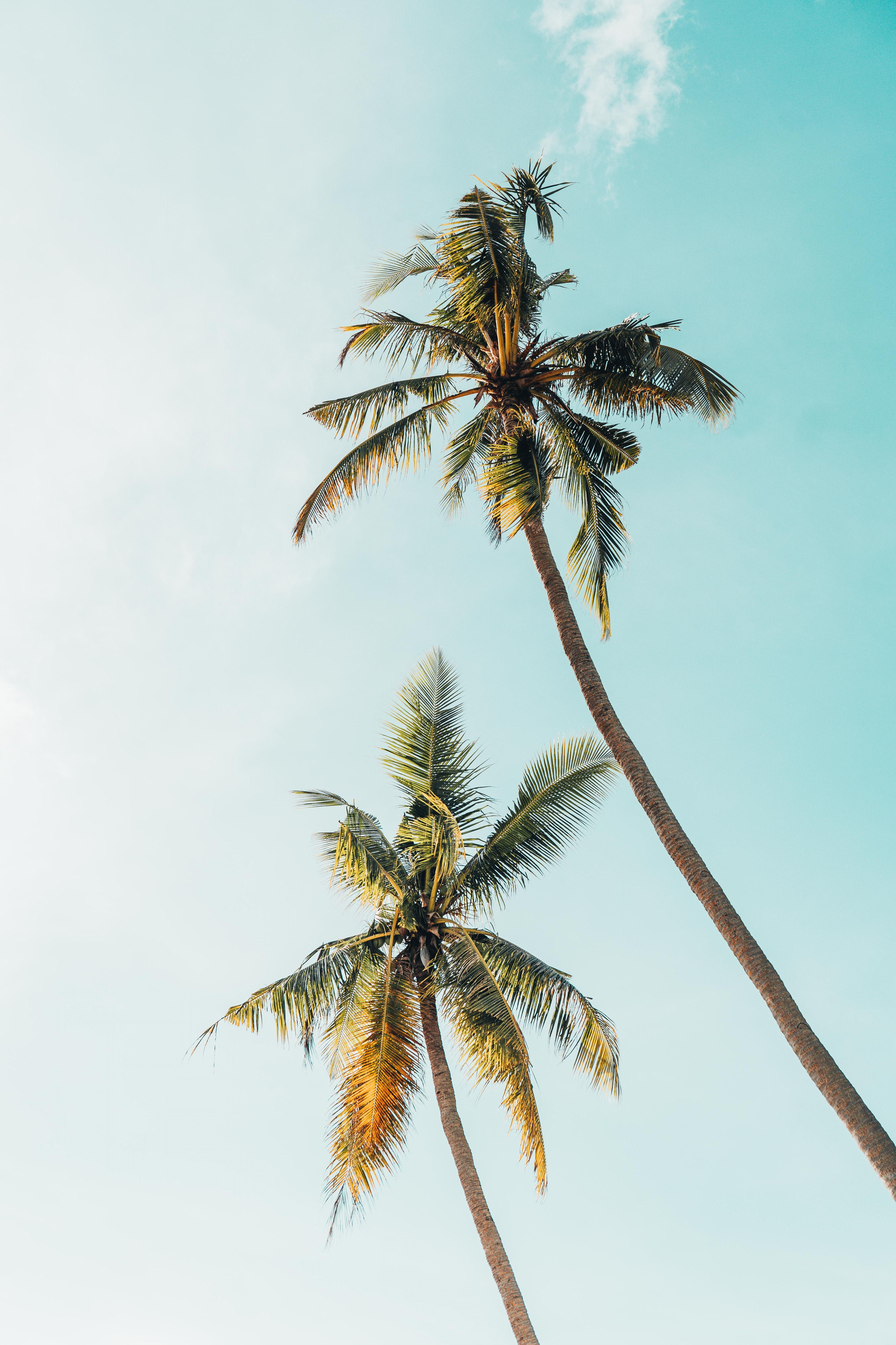 Tree, palm tree, sun and sky HD photo by James Connolly