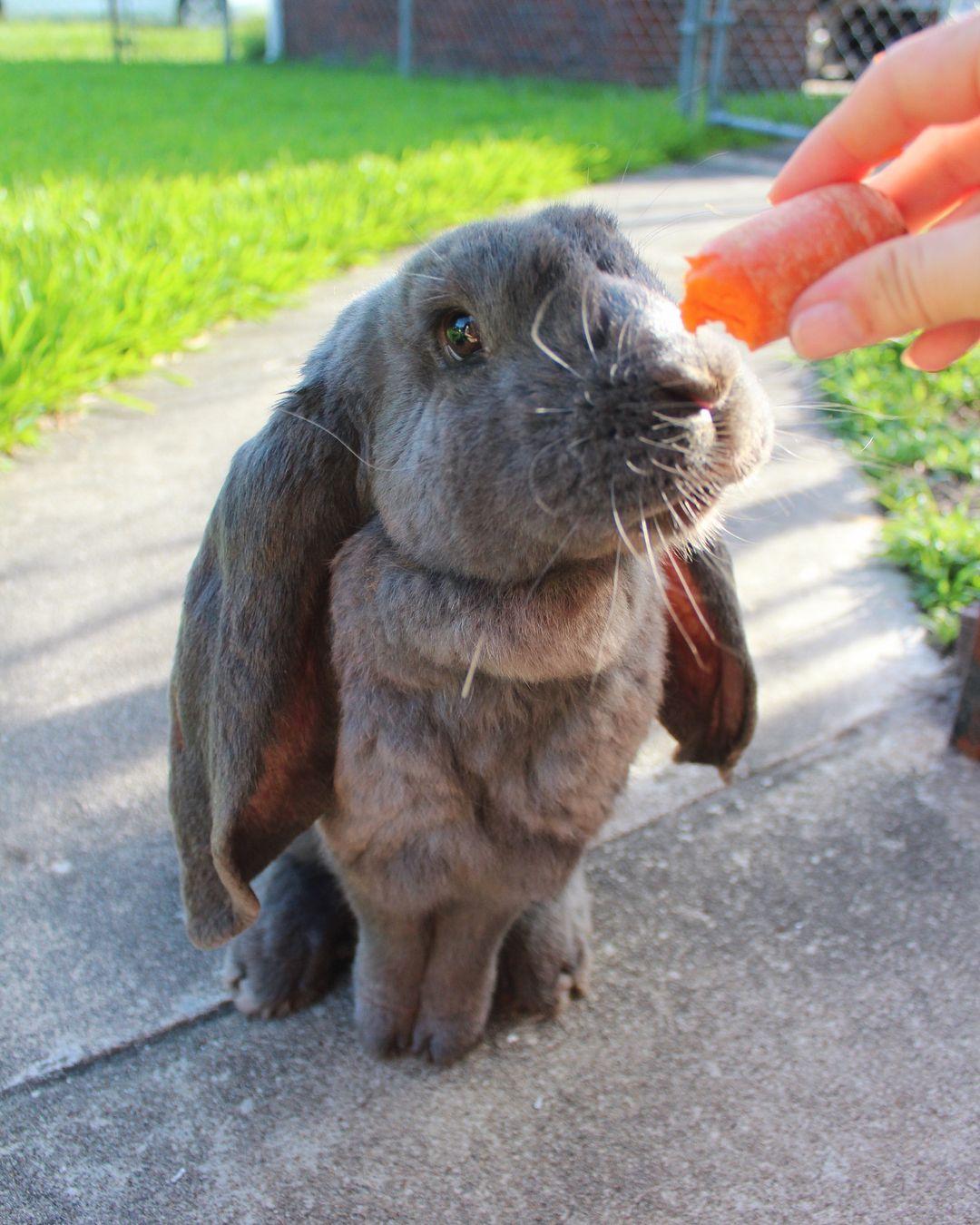 Pin on Rabbits