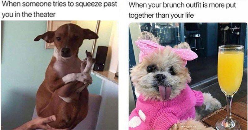 Nothing Like Summertime Doggo Memes To Escape The Heat Animal Memes Funny Dog Pictures Doggo