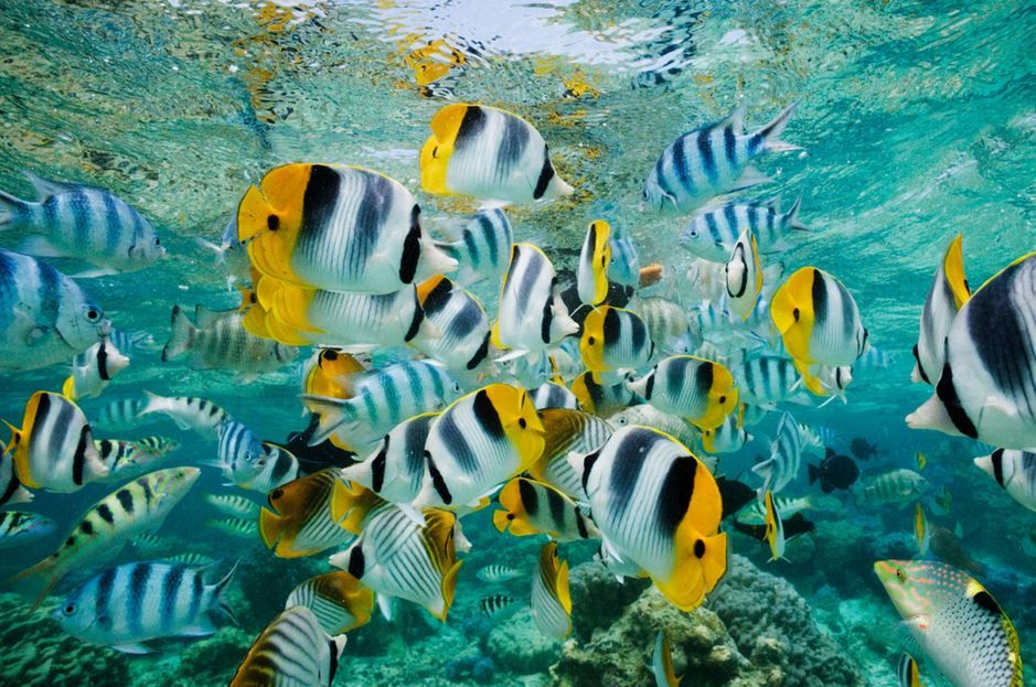 Fish in Coral Lagoon by Jeremy Woodhouse