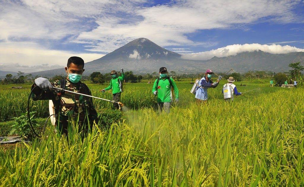 Petani Tradisional Indonesia Indonesia Petani