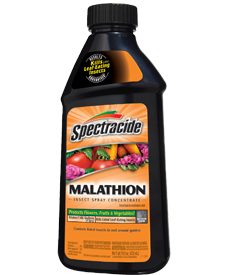 Malathion-for spider mites on dwarf alberta spruce trees