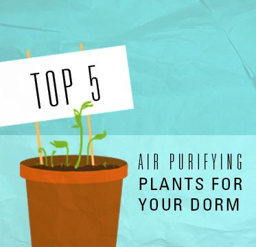 USFSP CONNECT | Top 5 Air Purifying Plants For Your Dorm Room Part 50