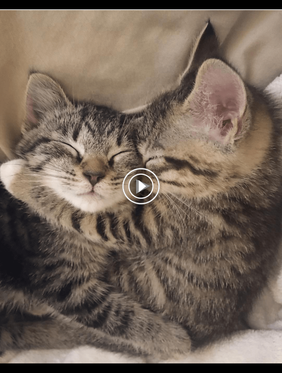 Pin On Save Kitty