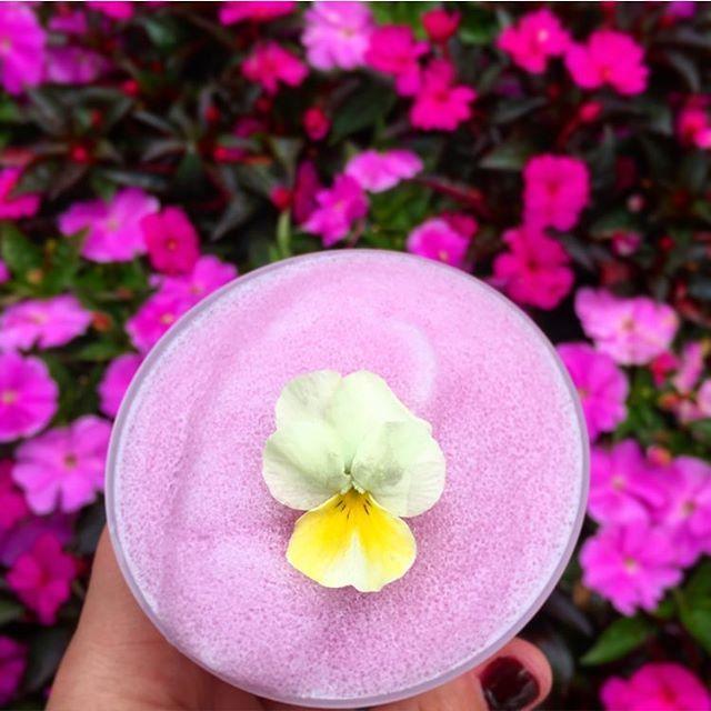 Violet Lemonade  #Epcot #Lemonade #Violet #Drinks #DisneyFood #Yummy #Disney #FlowerAndGarden #Colors