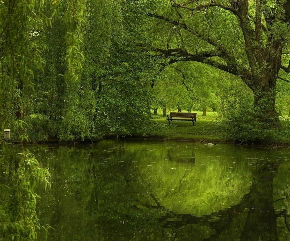 Green Forest Landscape by Irene Suchocki Landscape
