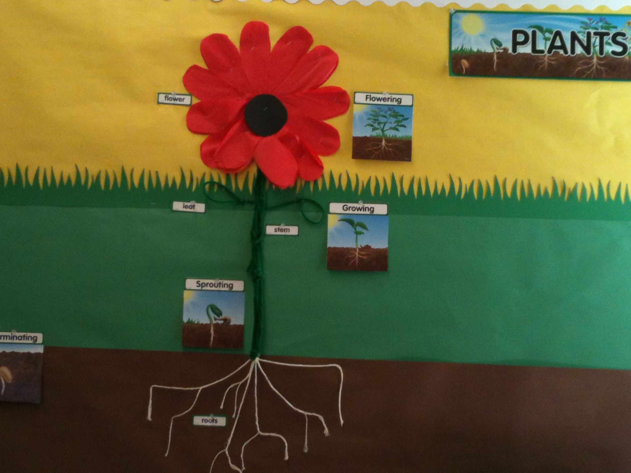Plant Parts For First Grade Science