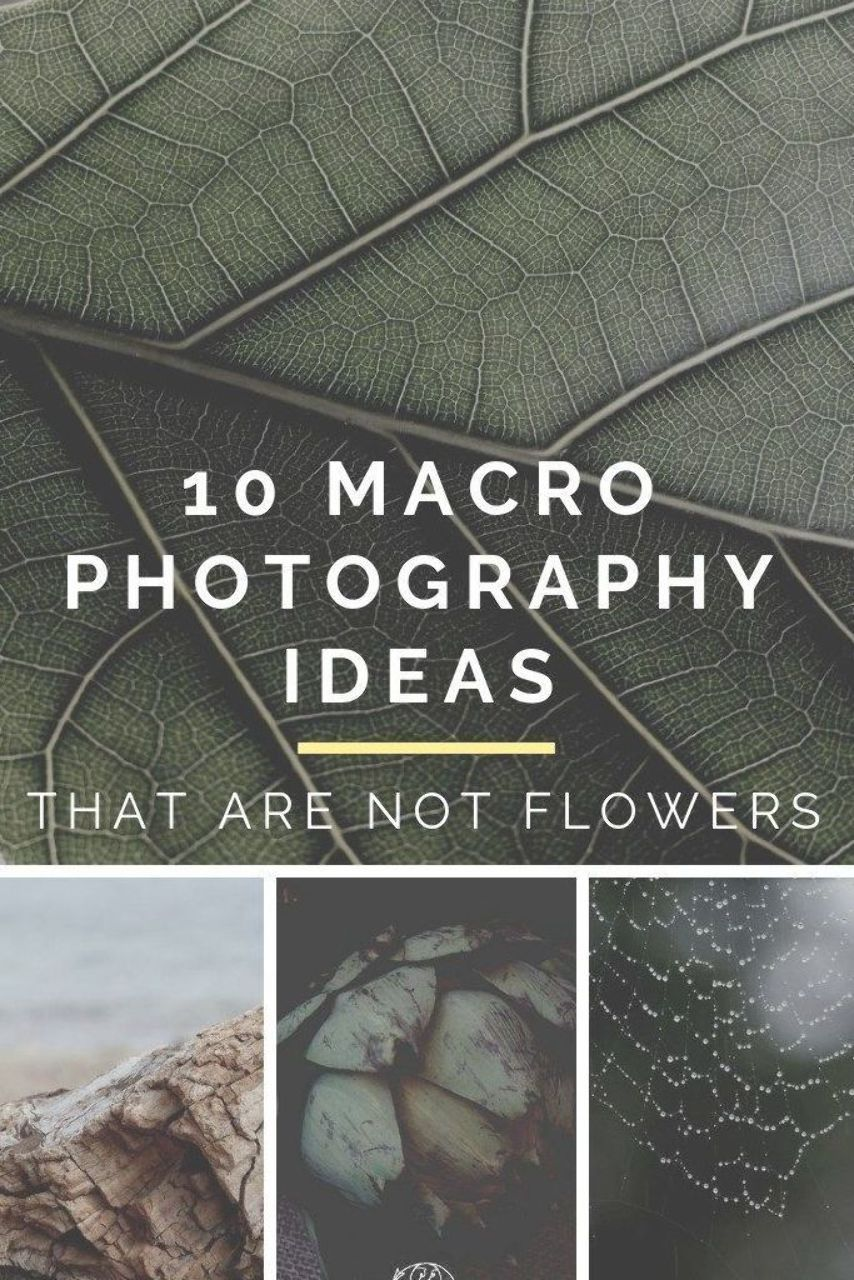 Abstract Photography For Beginners 9 Tips For Capturing: 10 Best Macro Photography Ideas For Beginner Photographers