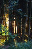 Woodland IMGP4867a by Biberius