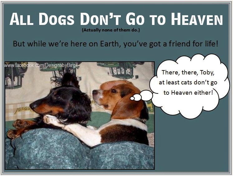 All Dogs Do Not Go to Heaven Find out what Pope Francis
