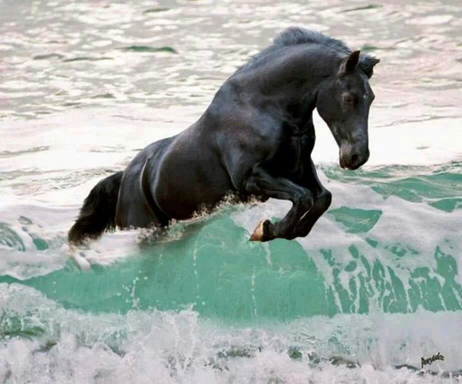 Horse Jumping A Wave Horses Animals Horse Pictures