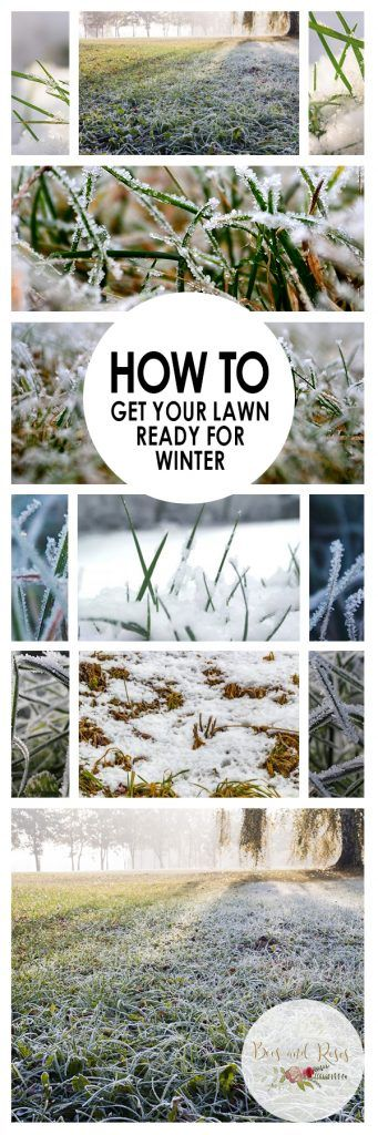 Charming How To Get Your Lawn Ready For Winter | Gardening Hacks, Lawn Care And Winter  Garden
