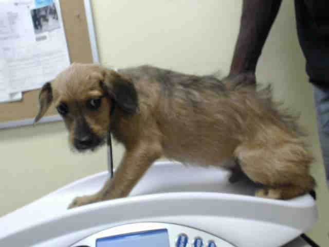 07 13 17 Owner Surrender No Hold Time Required Extremely Urgent Local Foster Needed Houston This Dog Id A488 Animal Shelter Animals Humane Society