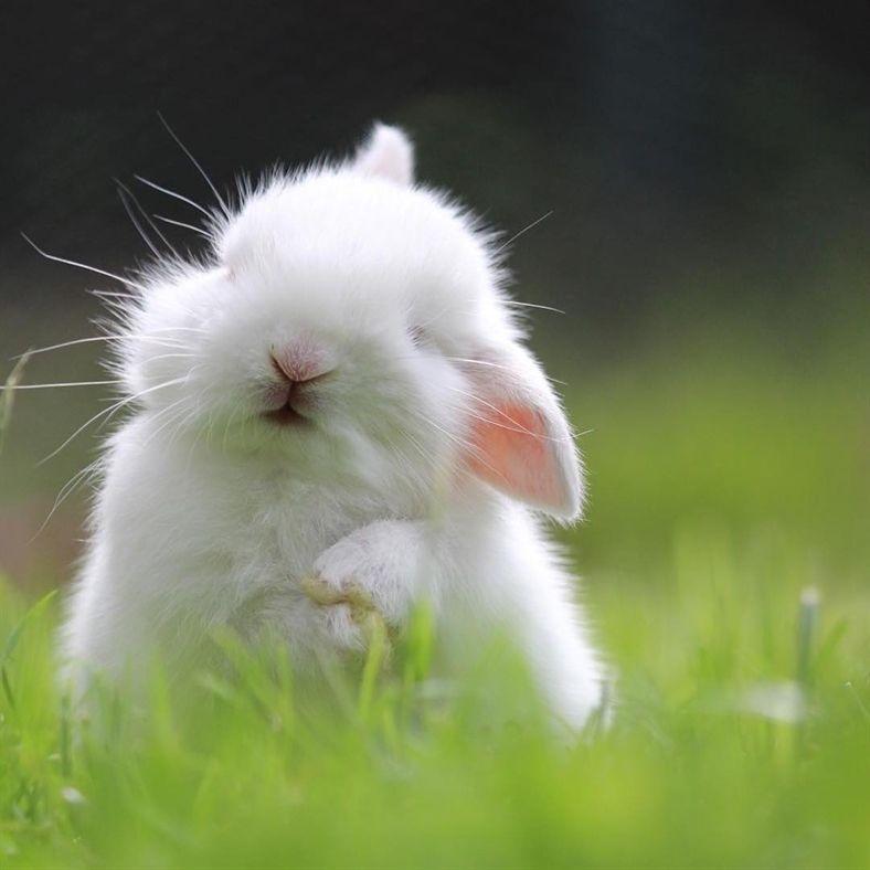 "My Love on Instagram: ""@borner.zwergenstube ・・・ Milo ❤️ Mein absolutes Lieblingsbild ❤️ #bunstagram #bunny #bunnybinky #bunnyboy #bunnyfresh #rabbitshoproom…"""