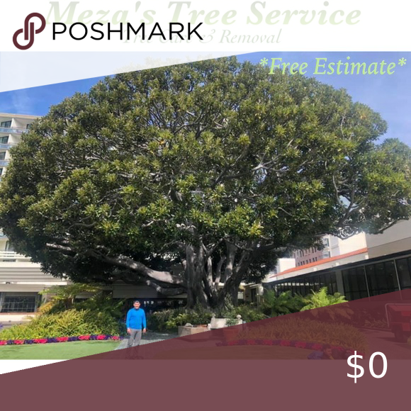 Tree Service Removal In 2020 Tree Service How To Remove Tree