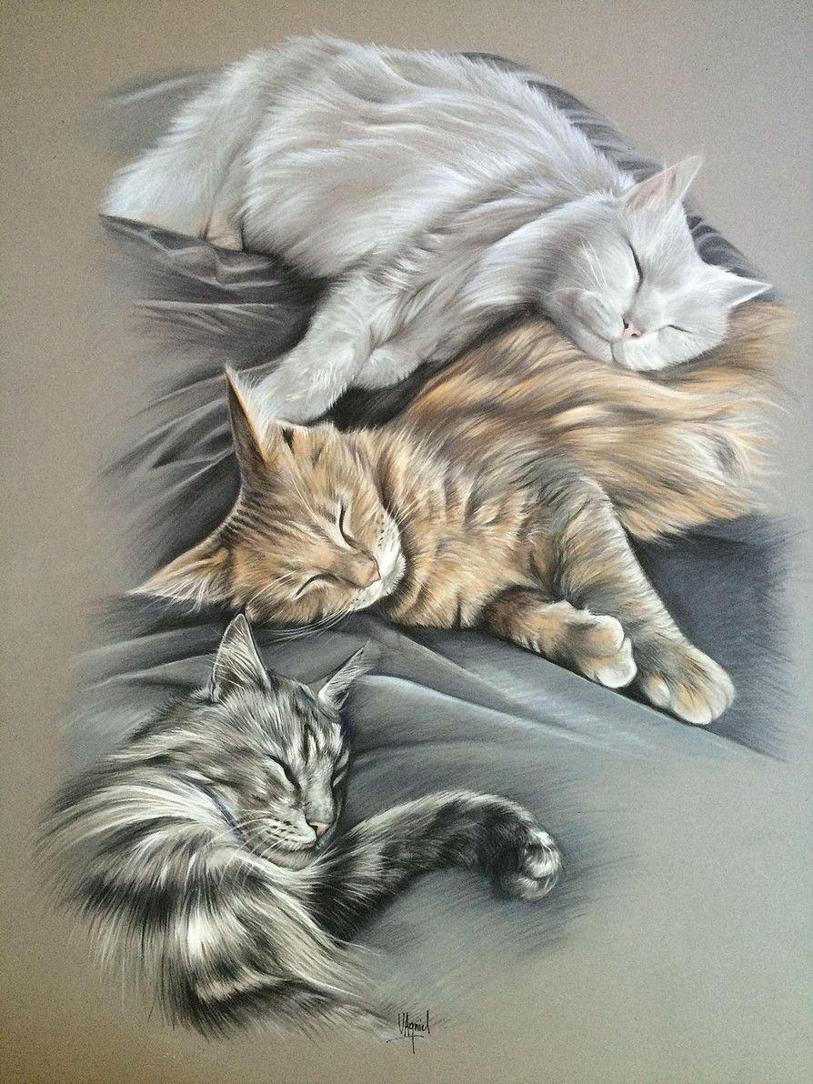 Portraits Chats Couches Illustration De Chat Peinture De Chat Aquarelle Chat