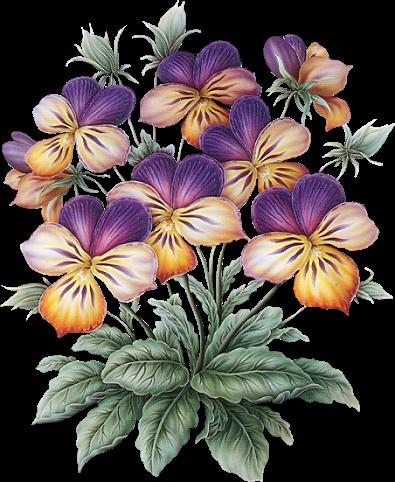 Fleurs des pensees des pens es pinterest la - Photo de fleur a dessiner ...