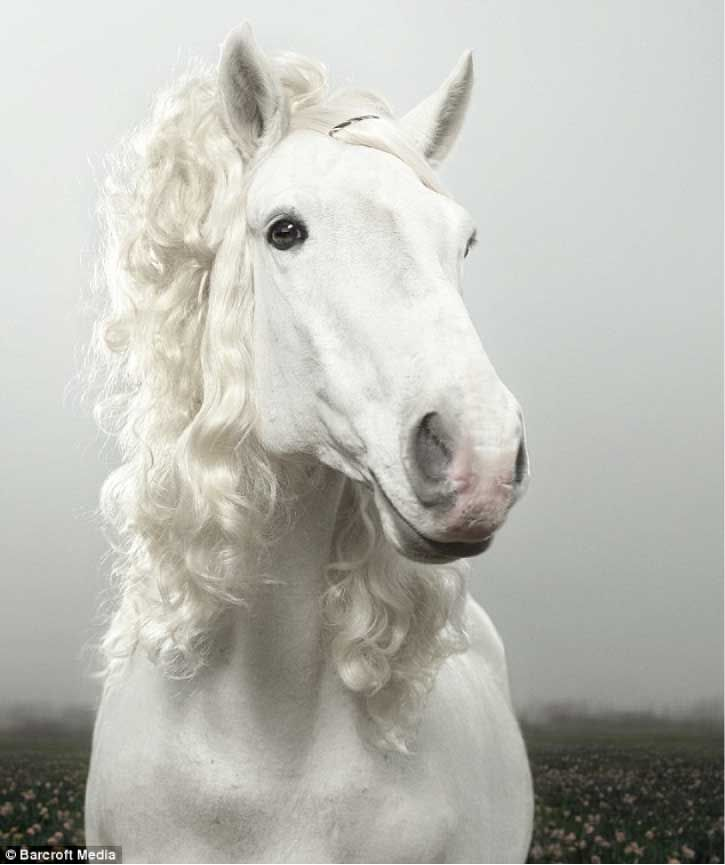 horse with pretty curly hair