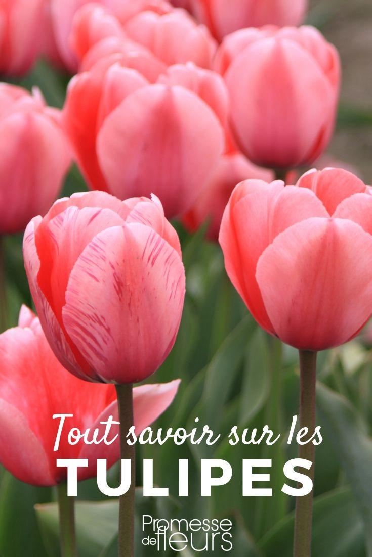 Tulipes : planter, cultiver et entretenir | Plantes ...