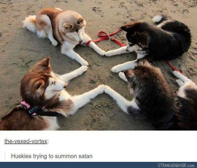 Funny Tumblr Post Random Humor Pinterest Animal Random And - 45 tumblr posts about animals that are impossible not to laugh at