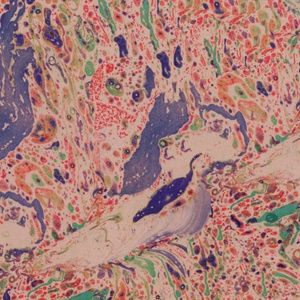 Leamon Paper - Peacock Marbled