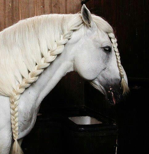 Pin By Makayla Haywood On Horsey Hairstyles Horse Braiding Horse Mane Braids Horse Mane