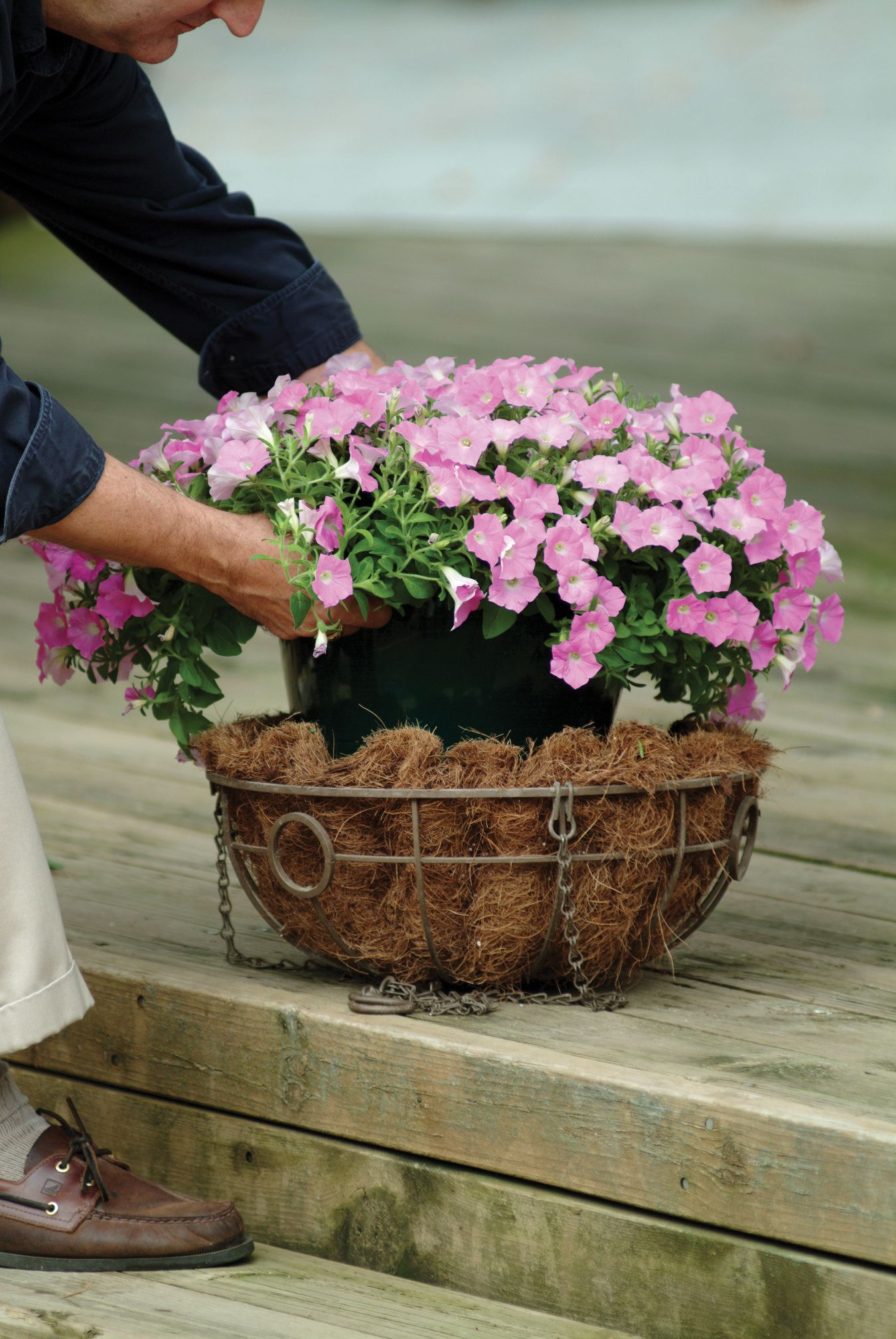 Planing This Shock Wave Pink Shades Petunia Into A Hanging Basket