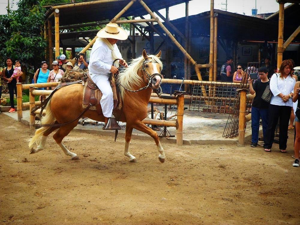Caballo de Paso en el restaurante El Rancho de Robertín en #Huaral ...
