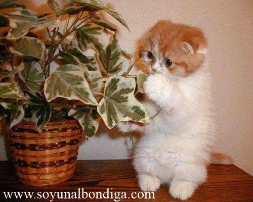 Fotos graciosas de gatos