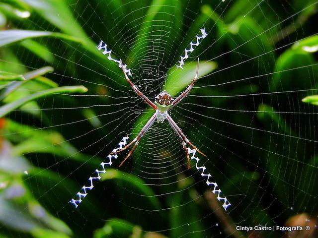 Winzy, Winzy araña!!!! by Cintya Castro, via Flickr