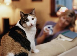 Understanding Cat Behaviour Problems And Treating Them Starts With Finding The Causes Pet Poison Cat Behavior Animal Hospital