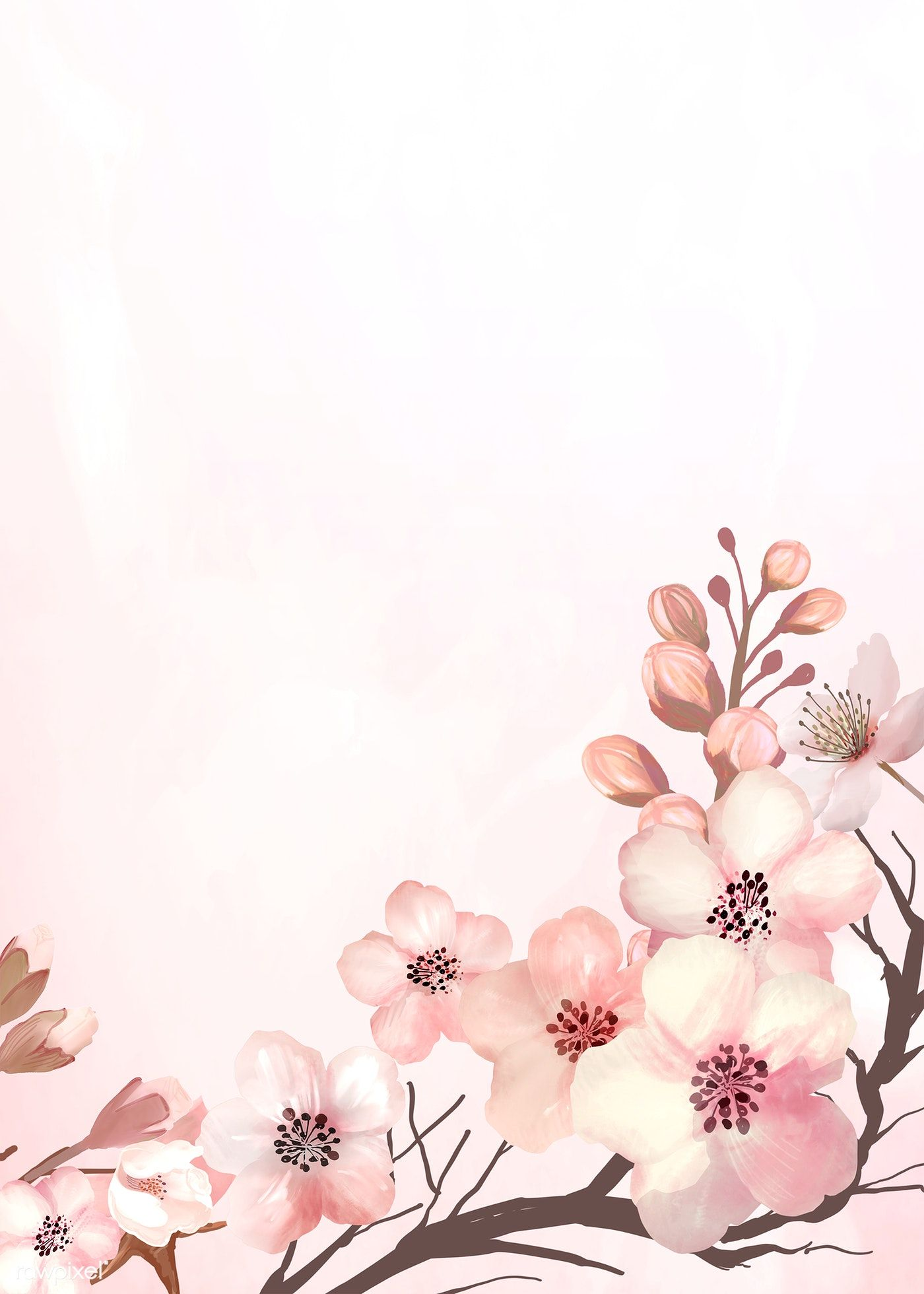 Download Premium Illustration Of Hand Drawn Cherry Blossoms On A Pink Cherry Blossom Background Pink Background Flower Illustration