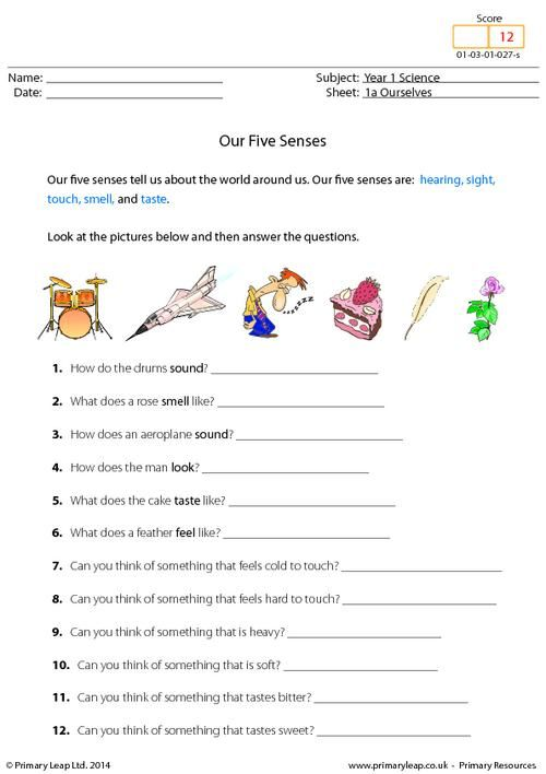 Primaryleap Co Uk Our Five Senses Worksheet The Five