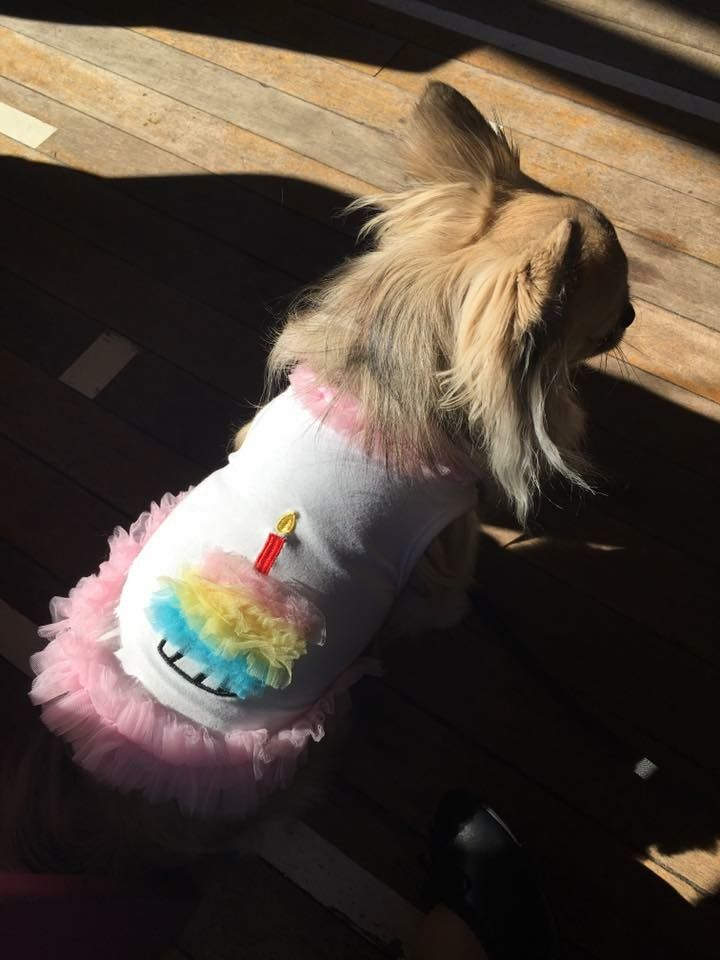 Puppy birthday top