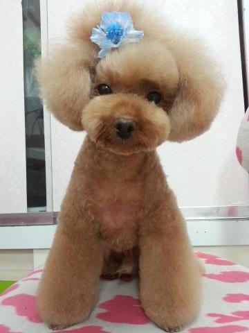 New Japanese Grooming Style Dog Grooming Dog Grooming Diy Pet