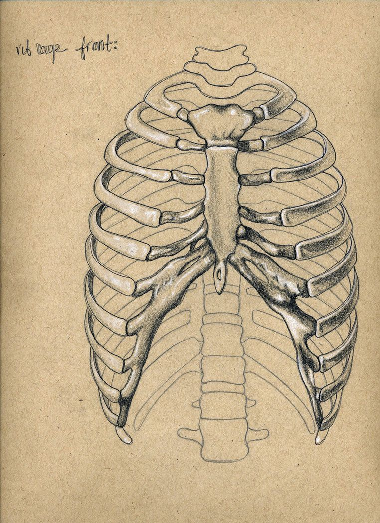 Rib Cage By Cawillanddesign On Deviantart Cages In 2019