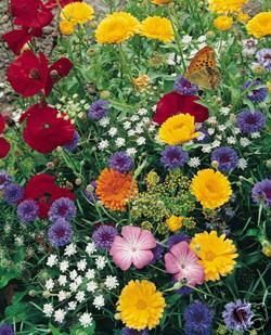 Wildflowers Butterfly mix:)