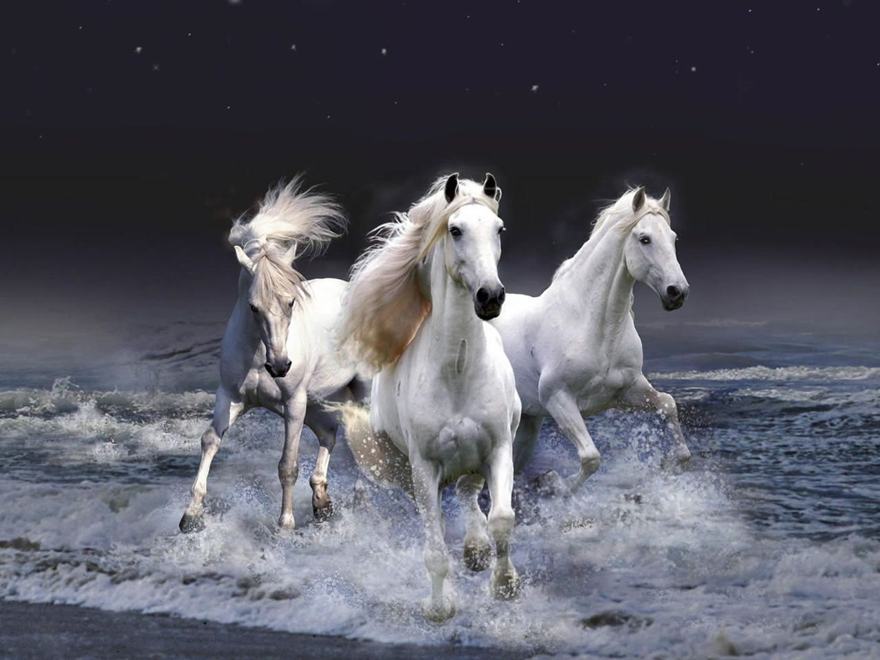 Three White Horses Running In The Water Horse Wallpaper White Horses Horses