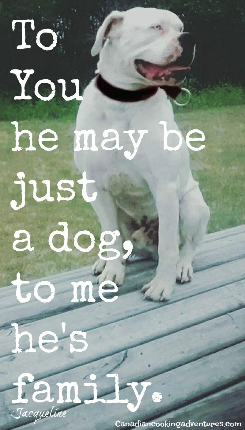 To You He May Be Just A Dog To Me He Is Family Quotes Quote Dog