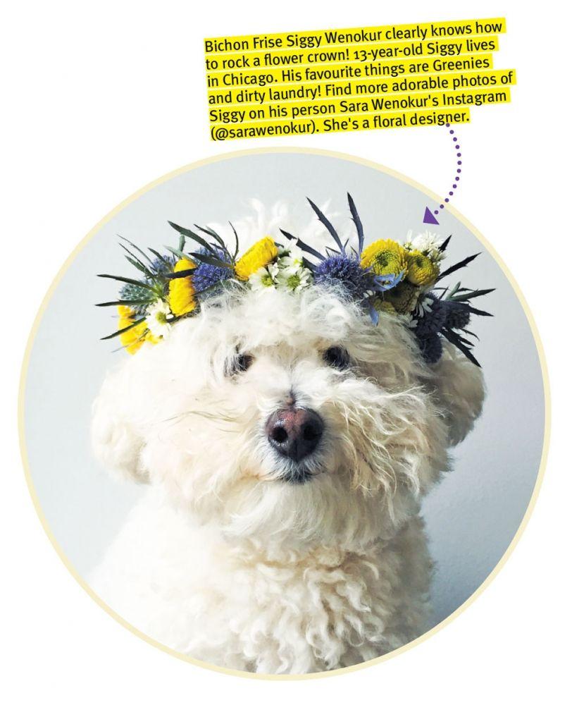 Crafts For Dog Lovers: DIY Craft: Make A Flower Crown For Your Dog