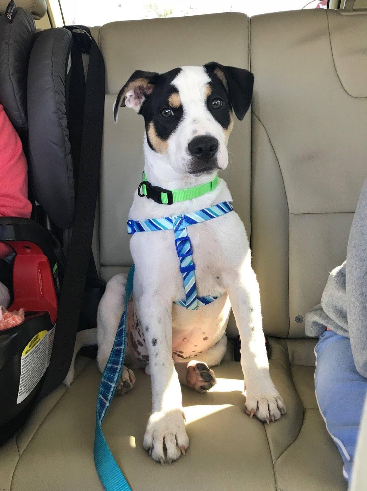 Puppy rescue south florida