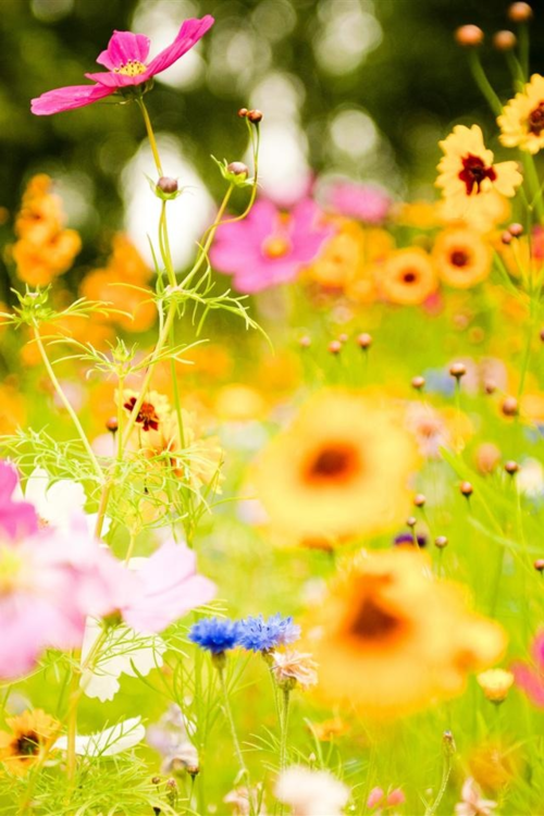 nature photography | Tumblr    #HalfPintPro #DazeHub #PSM #ProsperSM #ProsperSocial #ProsperSocialMedia    http://www.halfpintpro.com  http://www.dazehub.com  http://www.prospersocial.com    #HalfPintPro #DazeHub #PSM #ProsperSM #ProsperSocial #ProsperSocialMedia    http://www.halfpintpro.com  http://www.dazehub.com  http://www.prospersocial.com