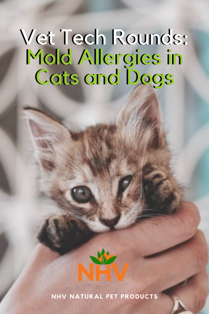 Vet Tech Rounds Mold Allergies In Cats And Dogs In 2020 Dog Cat Mold Allergy Holistic Pet Care