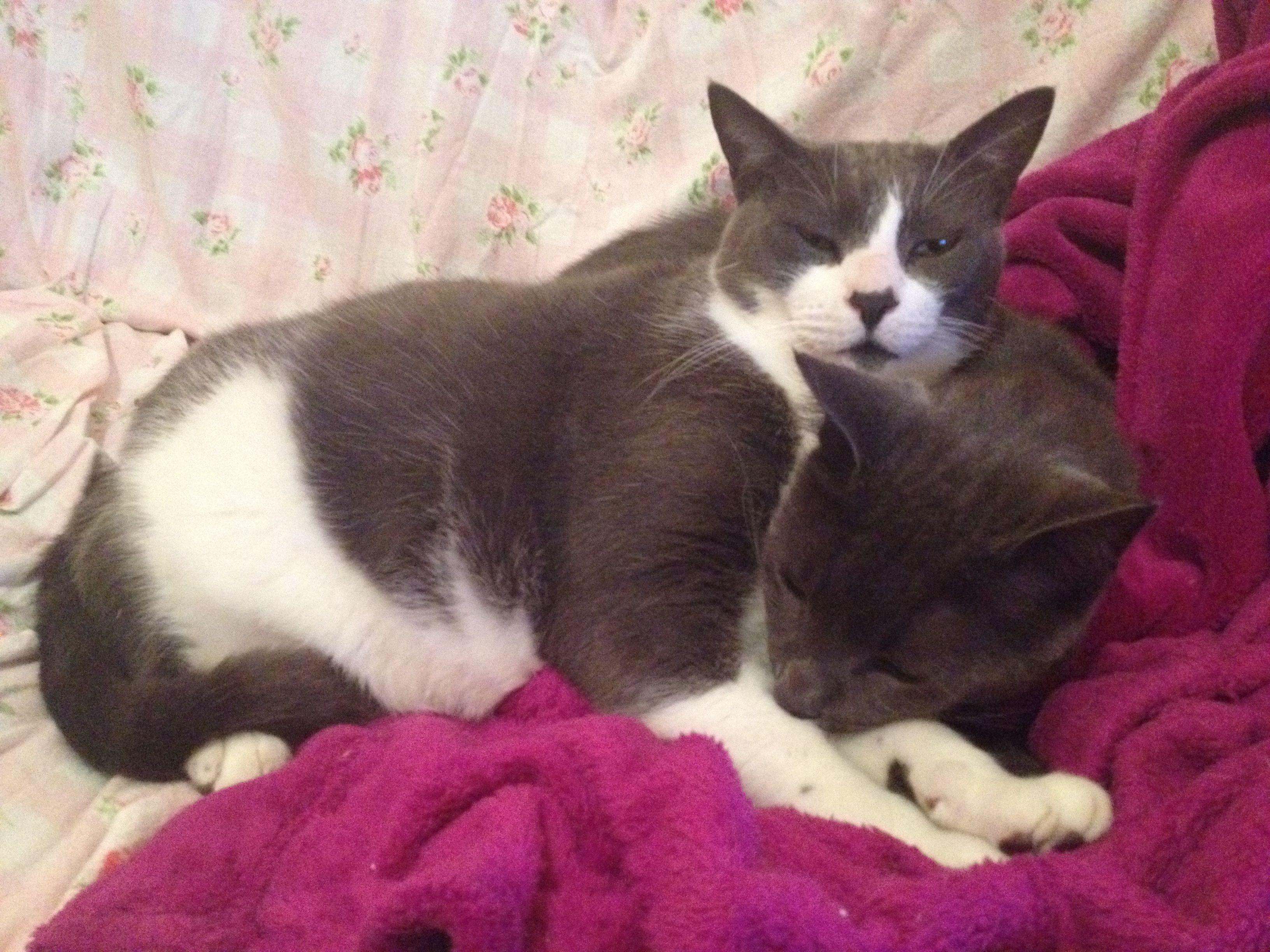 Choppie & Kit Kat #cats #animals