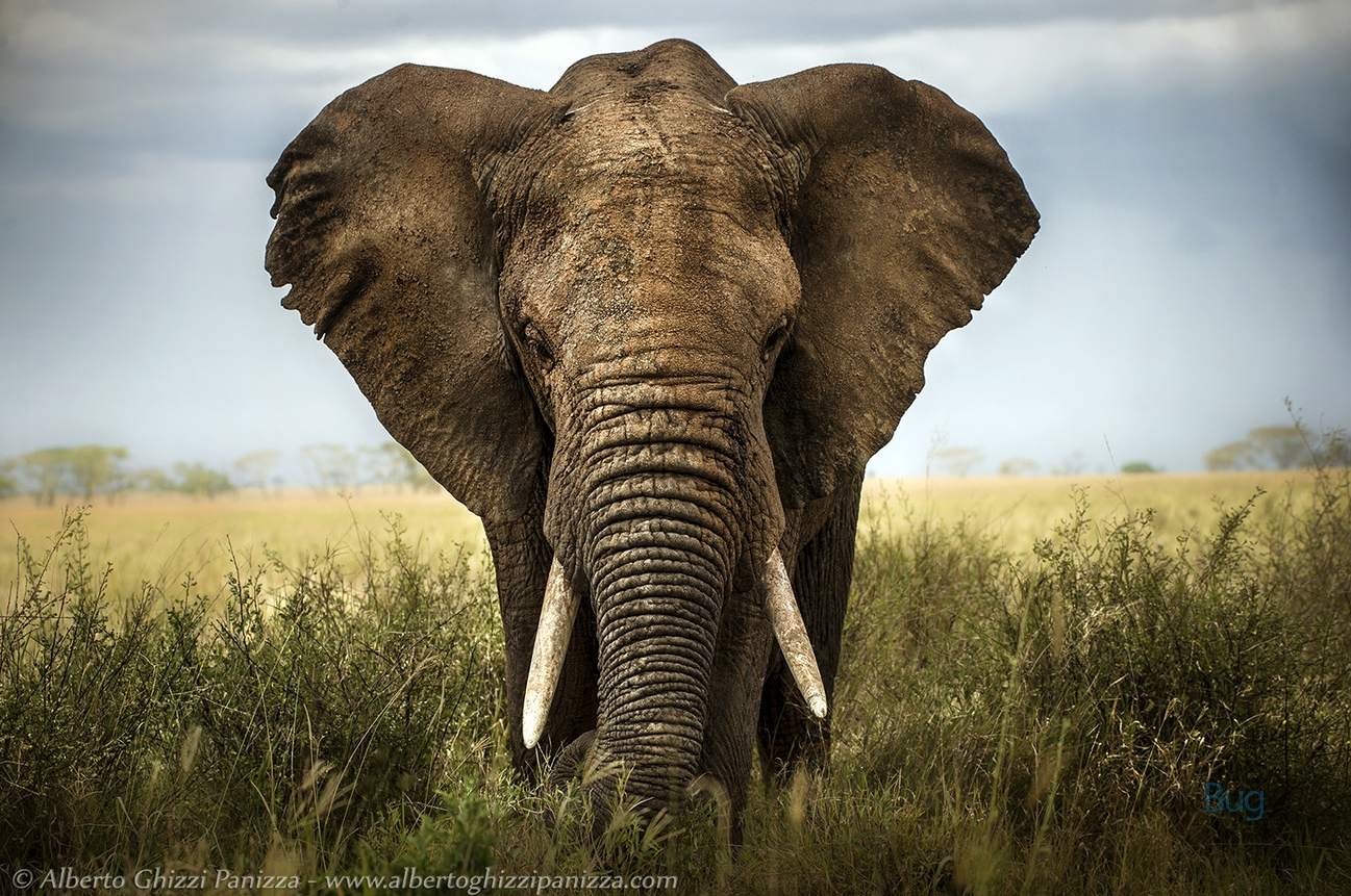 """They say """"Elephants"""" never forget. These images are absolutely unforgettable>> viewbug.com/D5EC photo: albertoghizzipanizza  animals 