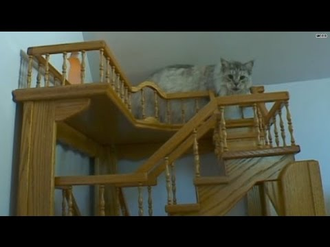 (99) Purrfect! Man's cat heaven 15 years in the making