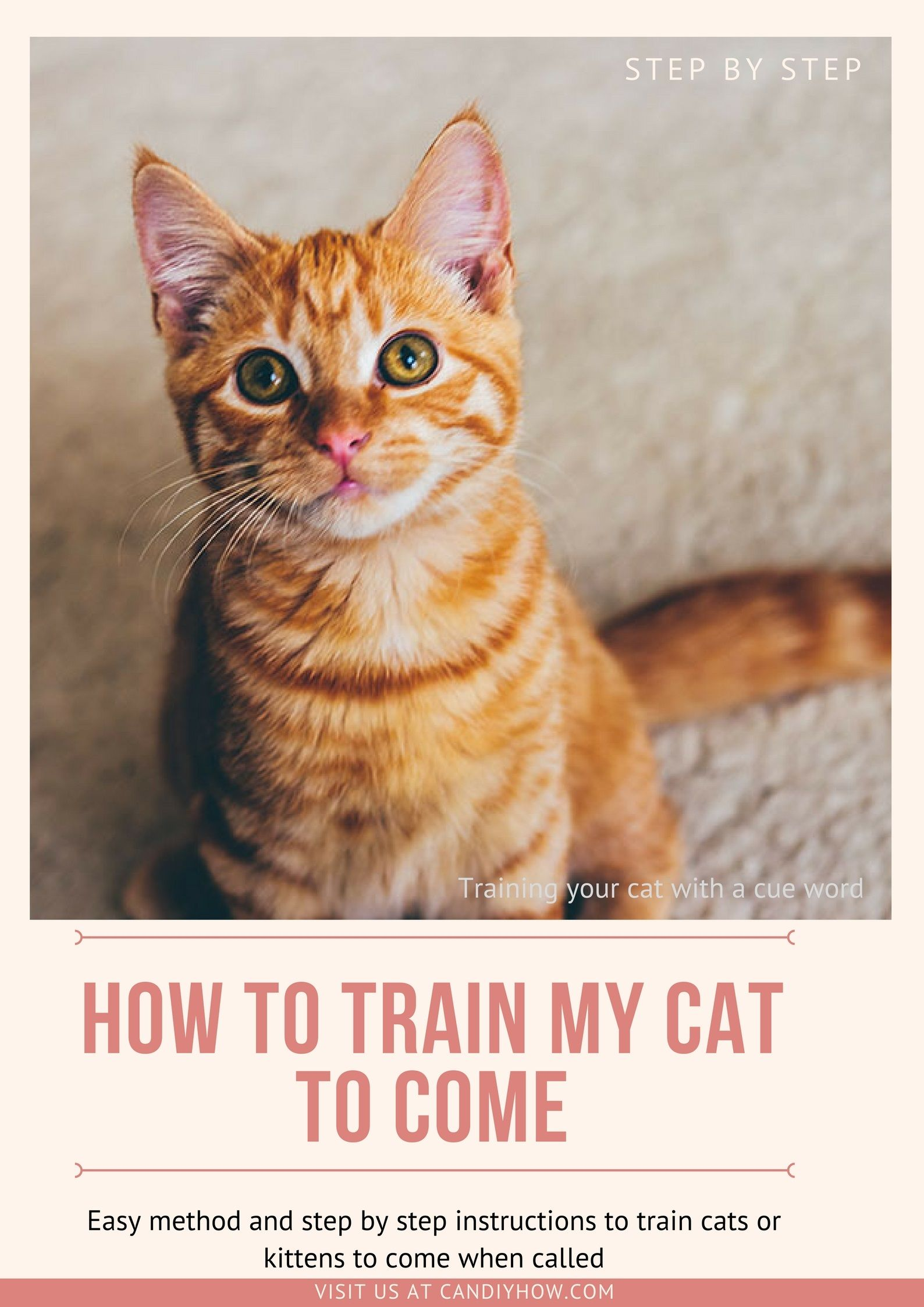 How To Use Cue Word N Treats Training My Cat To Come When Called Training Pets With Command Animal Training Cats Cat Training Pet Training